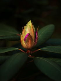 Zukunft Blume.. by Wladimir Zarew