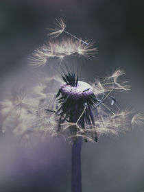 'It's time to go- Dandelion in the dark' by Chris Berger