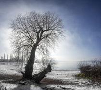 Weide im Winter by thomas-digital
