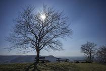 Herbstsonne by thomas-digital