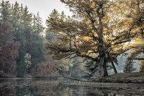 Die goldene Eiche by thomas-digital