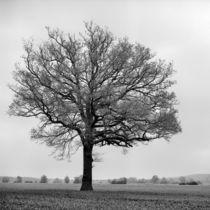 Calenberger Land VIII by Nils Volkmer