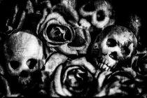 Auf Rosen gebettet von Petra Dreiling-Schewe