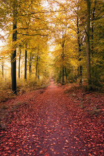 Autumn path by h3bo3