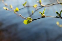 Springlight by Heidi Piirto
