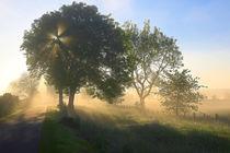 Bäume in der Morgensonne von Bernhard Kaiser