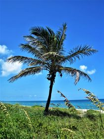 Palme am Strand ....Florida by assy