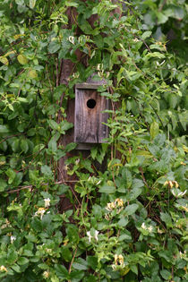 Bird house in the honeysuckle von June Buttrick