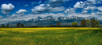 Spring under the High Tatras, Slovakia by Tomas Gregor