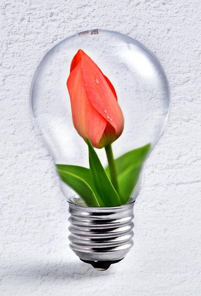 Gluehbirne-tulpe