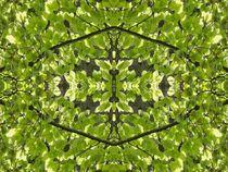 Buche im Spiegelbild von kattobello