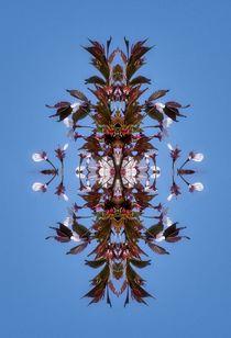Kirschblüten Fantasie 7 von kattobello
