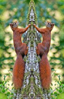 Eichhörnchen Zwillinge von kattobello