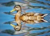 Ente mit Spiegelbild von kattobello