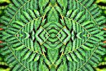 Farn im Spiegelbild 1 von kattobello