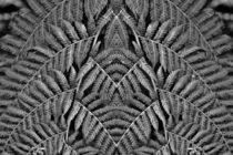 Retro Farn im Spiegelbild 2 von kattobello