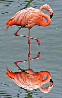 Flamingo mit Spiegelbild von kattobello