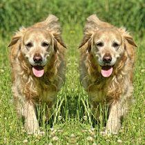 Golden Retriever Zwillinge by kattobello