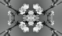 Retro Kirschblüten Traum 1 von kattobello