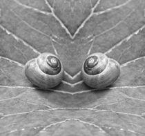 Retro Schnecken Zwillinge von kattobello