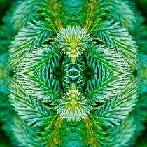 Tannenzweige im Spiegelbild von kattobello