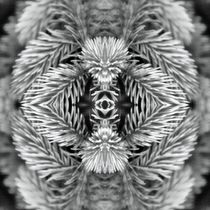 Retro Tannenzweige im Speigelbild von kattobello