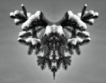 Wintergeweih 2 von kattobello
