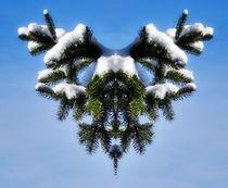 Wintergeweih 1 von kattobello
