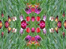 Frühlingstraum 2 von kattobello