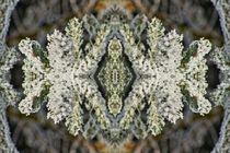 Eiskristalle 1 von kattobello