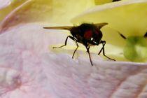 Fliege von art-dellas