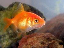 Goldfisch  von art-dellas