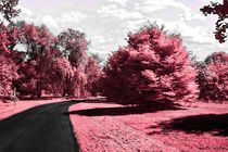 Infrared Landscape with Road and Trees