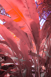 Banana Leafs seen Infrared von dag