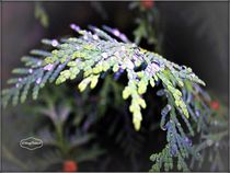 Raindrops  copyright Mary Lee Parker 17 by Mary Lee Parker