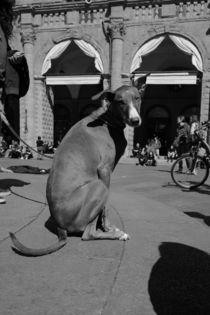 Dog or Kangaroo ? by Azzurra Di Pietro