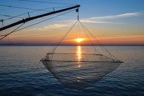 Net by Azzurra Di Pietro