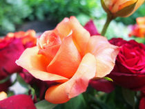 Die orange Rose von Eva Dust