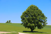 Baum by stephiii