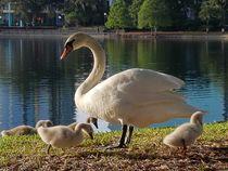 Goose mom von Natalia Nespolo