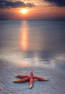 Meerstern  by Raid  Omar