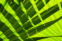 fronds by dean moriarty