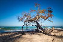 Umgestürzter Baum am Weststrand von Rico Ködder