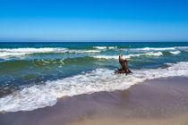 Baumstamm an der Küste der Ostsee von Rico Ködder