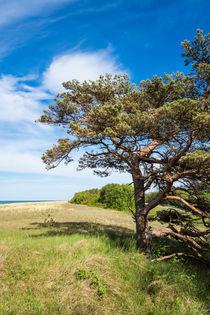 Küstenwald bei Prerow von Rico Ködder