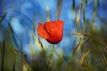 Die Mohnblume  -  Königin der Wiese von Claudia Evans