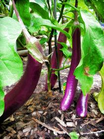 Long Purple Eggplant von lanjee chee