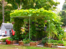 Organic Gardening 1 von lanjee chee