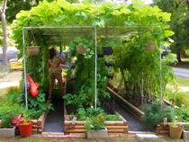 Organic Gardening 2 von lanjee chee