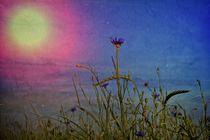 Kornblumen Idylle von Claudia Evans